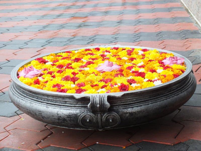 Floating flower carpet royalty free stock photo