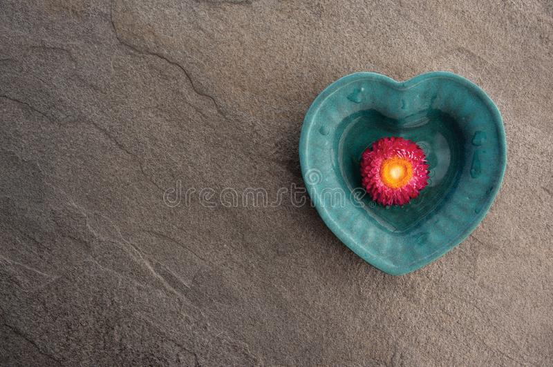 Floating Flower In Heart Bowl. Still Life Photography beautiful pink flower in a Heart bowl on a gray stone background. Grounded yet flowing love royalty free stock photos