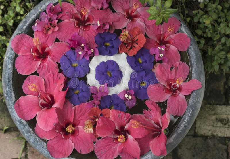 Floating hibiscus flowers on a round bowl filled with water royalty free stock images