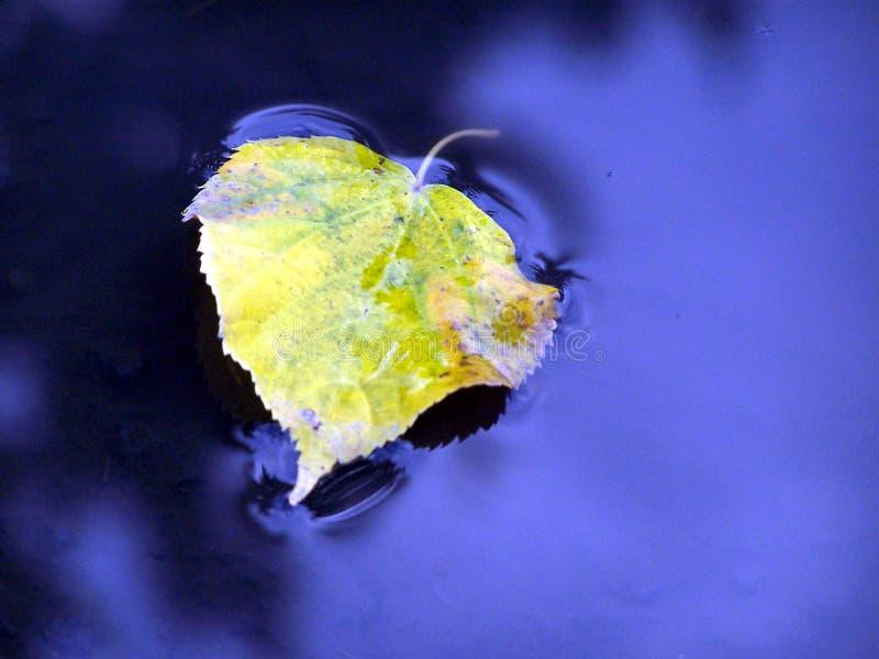 Floating Leaf stock photo