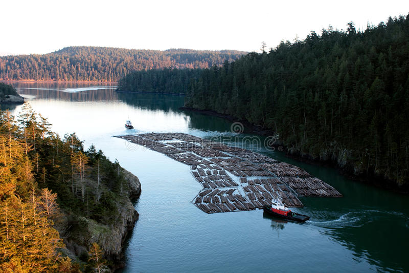 Floating Logs at Deception Pass royalty free stock images
