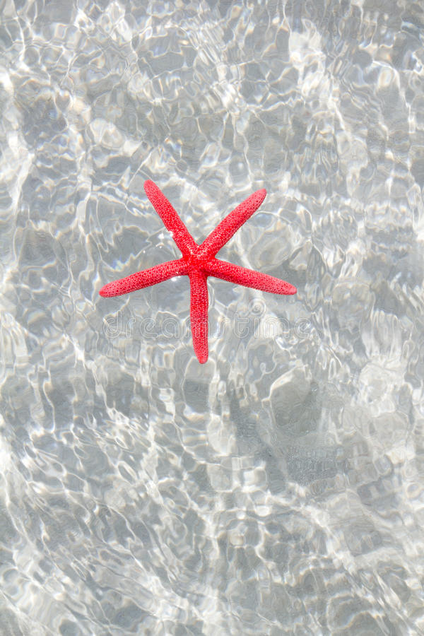 Download Floating Red Starfish In White Sand Beach Stock Photo - Image: 21737940