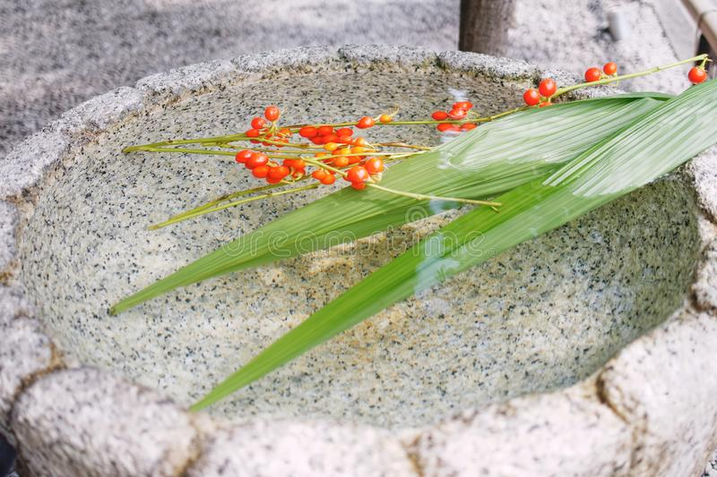 Floating small red fruits and long green leaves in the stone basin. Floating small red fruits and long green leaves in the Japanese stone basin royalty free stock photo