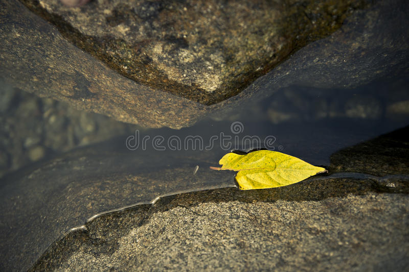Floating Yellow Leaf. Yellow leaf floating in a river between two boulders stock photos