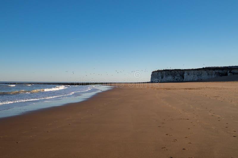 Flocage des oiseaux volant au-dessus des falaises sur la plage au coucher du soleil image stock