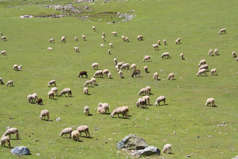 flock arkivfoto