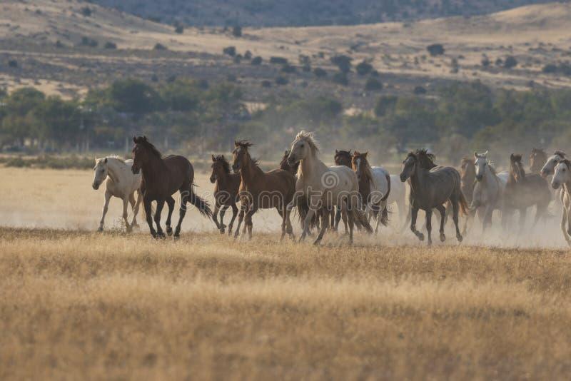Flock av att köra för vildhästar arkivfoto