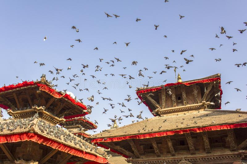 Flock av duvor i den blåa klara blåa himlen över de röda asiatiska tempelpagoderna arkivfoton