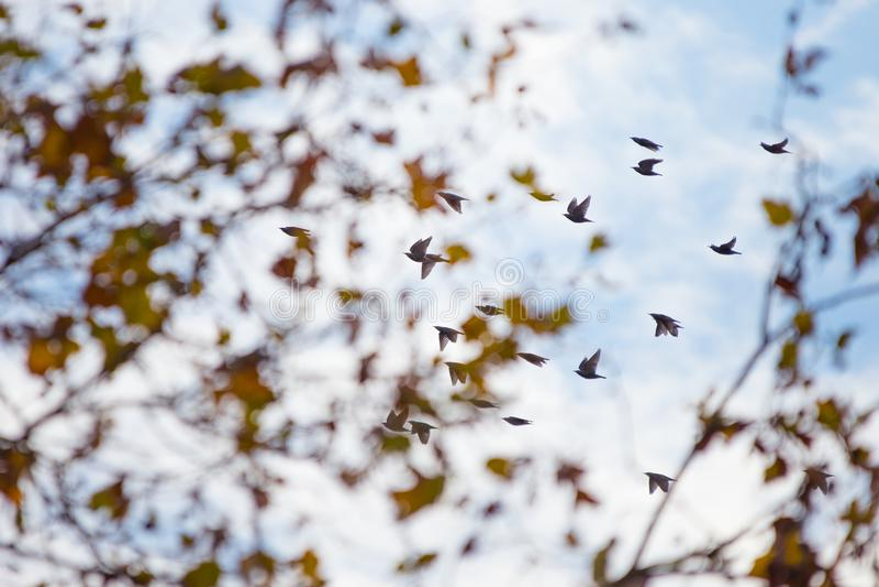Flock av fåglar royaltyfria bilder