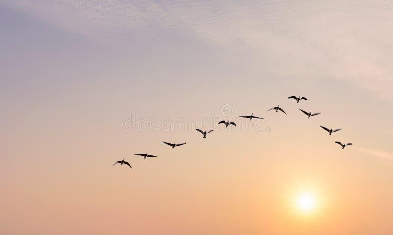 Flock av fåglar på soluppgång- eller solnedgångnaturbegreppet royaltyfria bilder