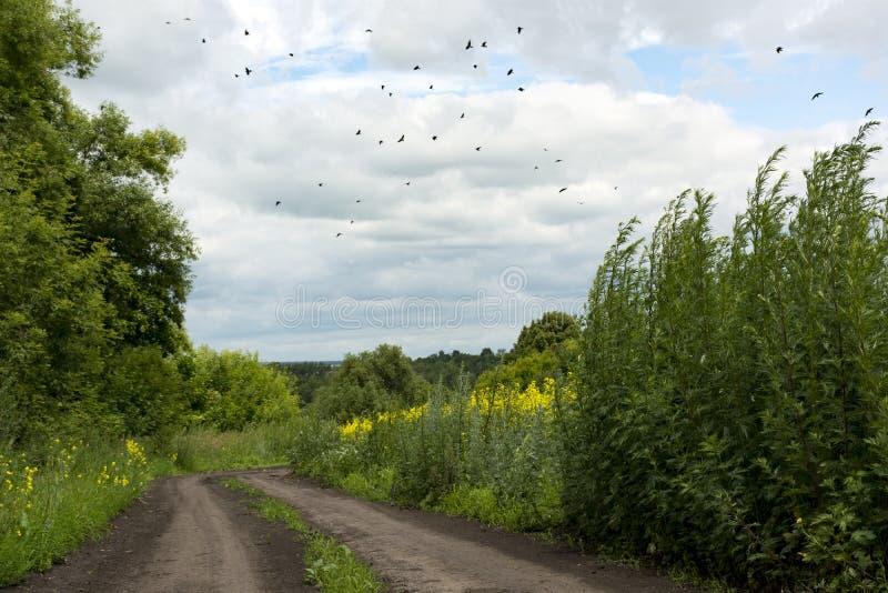 Flock av fåglar som flyger över en grusväg, bygd, gräs, skrän royaltyfria bilder