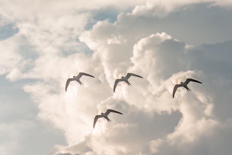 Flock av fåglar som flyger mot bakgrunden av moln som är utvandrande royaltyfria foton