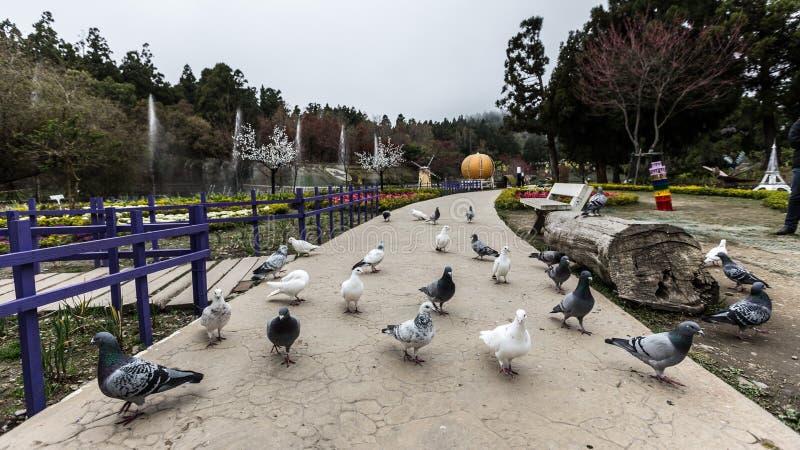 Flock av fåglar som går på gatan royaltyfri bild