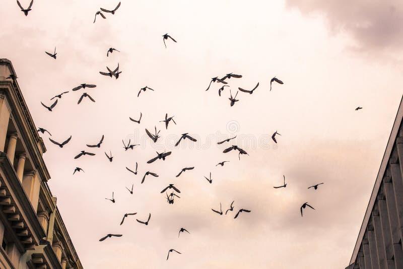 Flock av fåglar som högt flyger arkivfoton