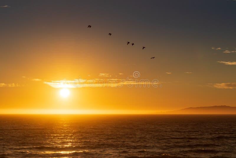 Flock av fåglar som söker för matställe på solnedgången royaltyfri foto