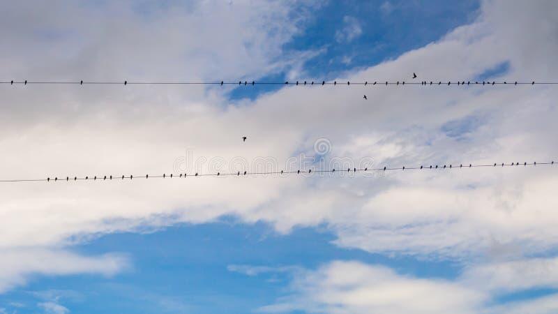 Flock av firds på nytto- trådar arkivbild