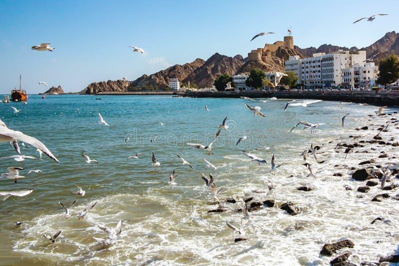 Flock av fiskmåsar på kusten av den omanska fjärden i staden av Muscat nära stranden arkivbild