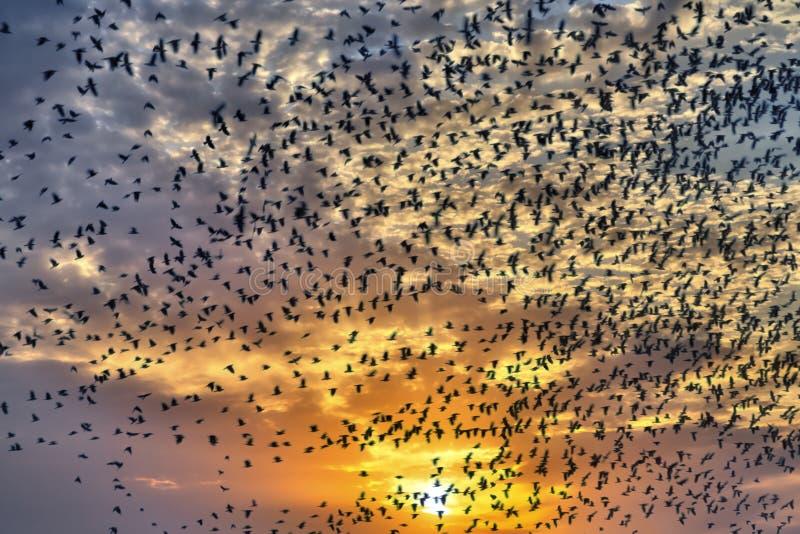 Flock av flygfåglar royaltyfria foton