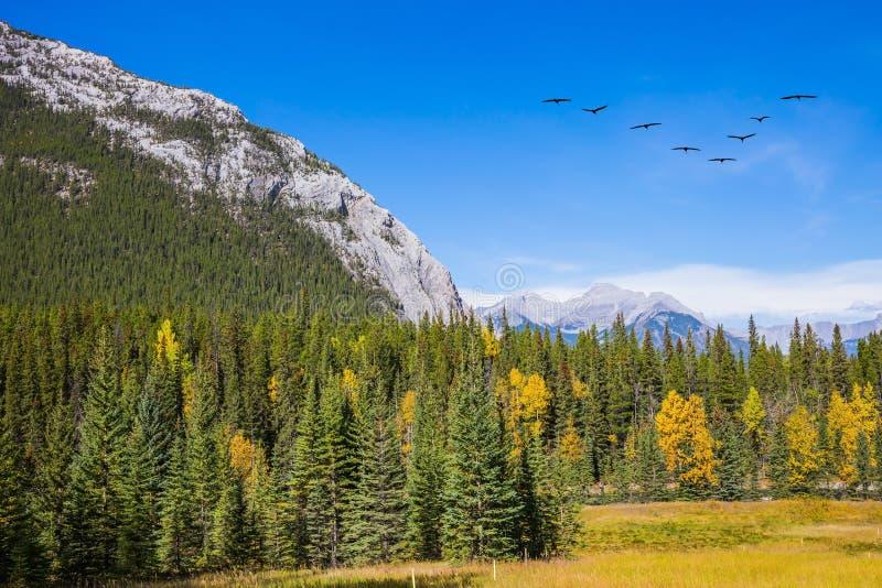 Flock av flyttfåglar i himlen royaltyfri bild