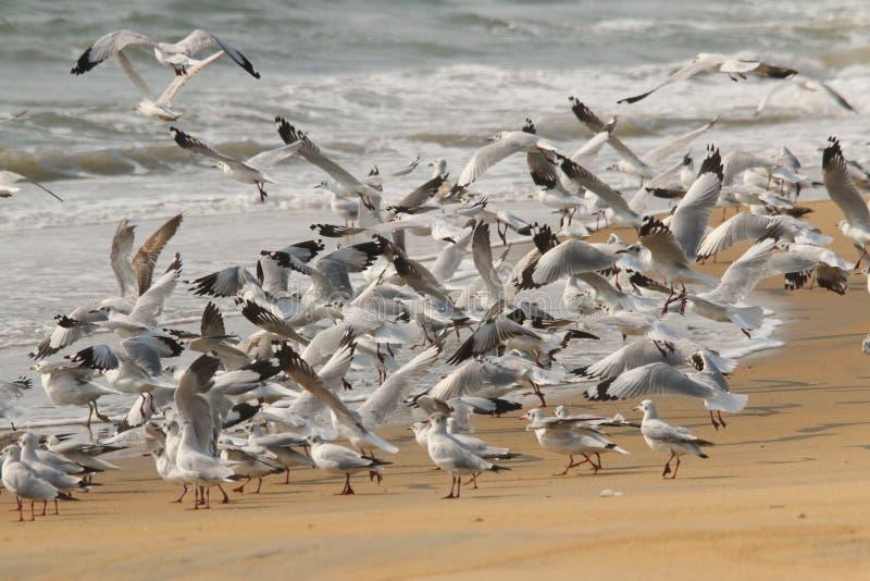Flock av seagullen i strandstart royaltyfri fotografi