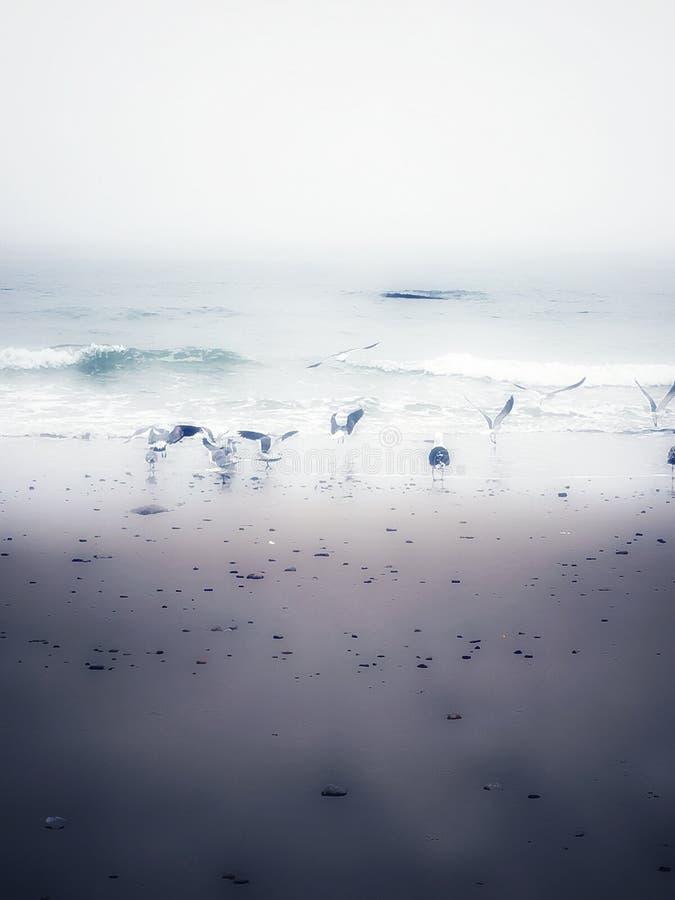Flock av Seagulls arkivfoto