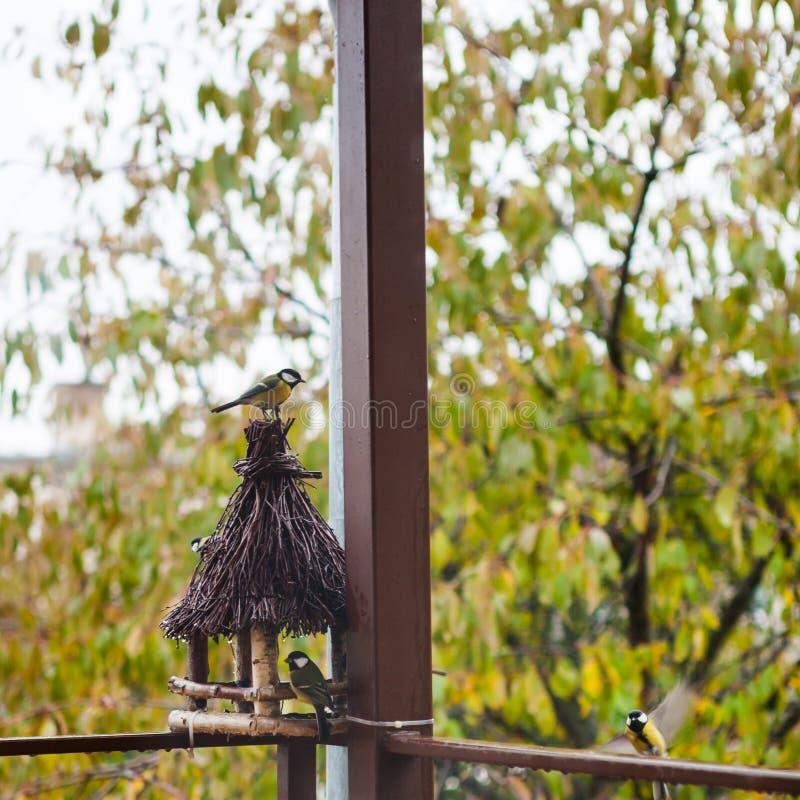 Flock av talgoxefåglar som sitter nära träförlagematare arkivfoton