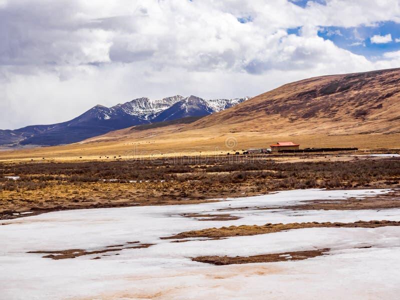 Flock av yaks som betar i fältet nära berget arkivbild