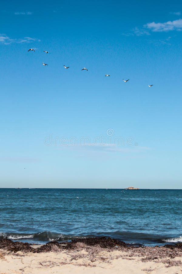 A flock of bird flying over the sea. A Flock of bird flying in line over the sea stock images