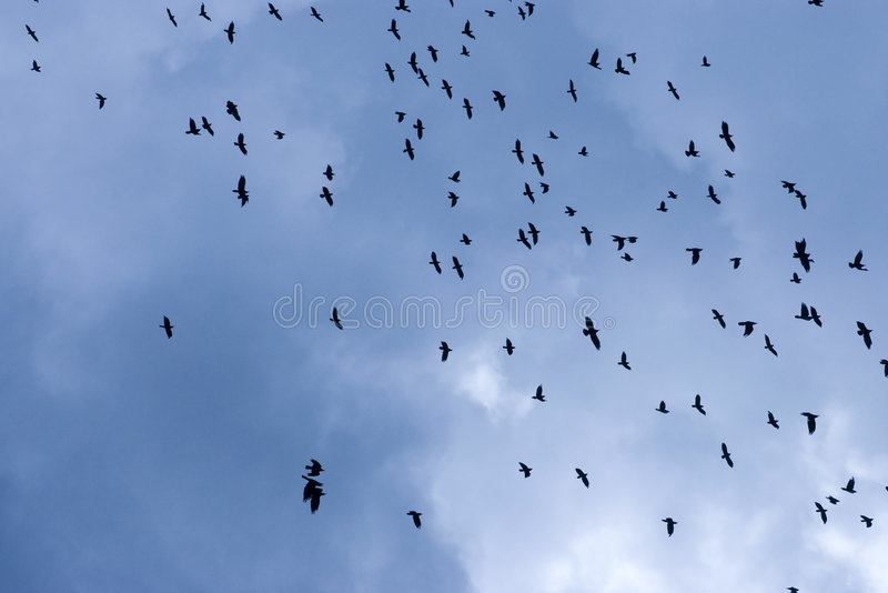 Flock of birds. In sky royalty free stock images