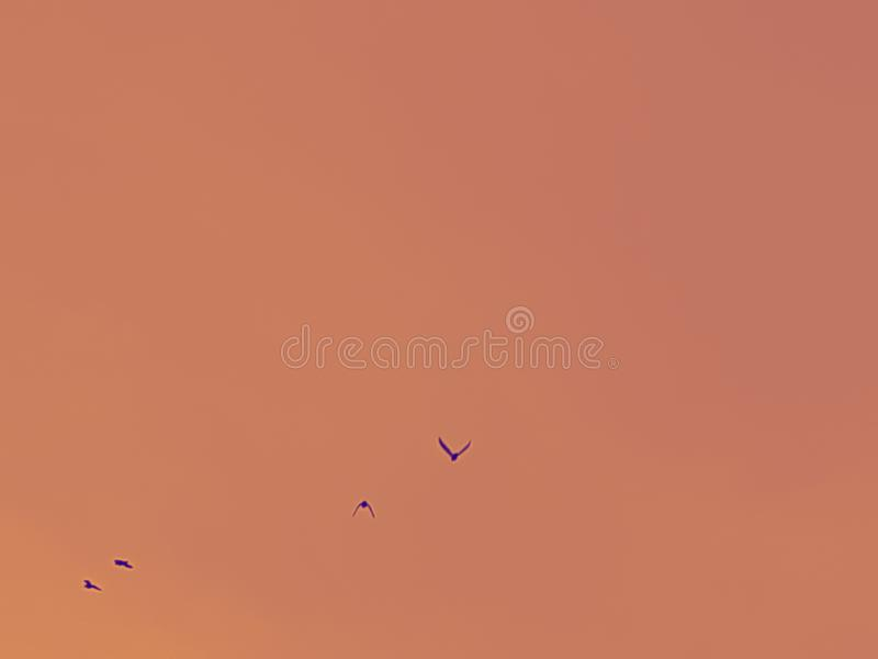 Flock of birds in abstract background. Flock of birds in abstract, nature, fly royalty free stock photography