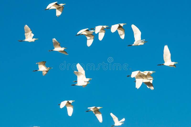 Flock of birds in the blue sky stock photo