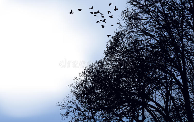 A Flock Of Birds Flew Off From The Branches Stock Image