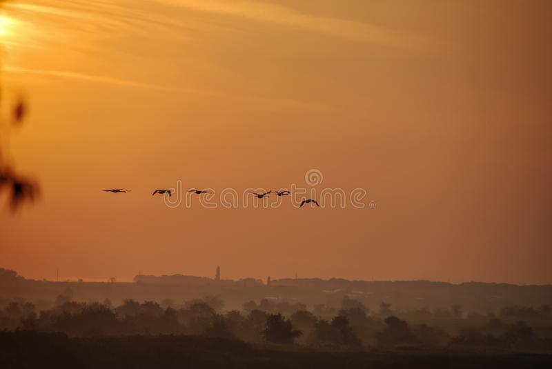 A flock of birds flies over the river at sunset. royalty free stock photography
