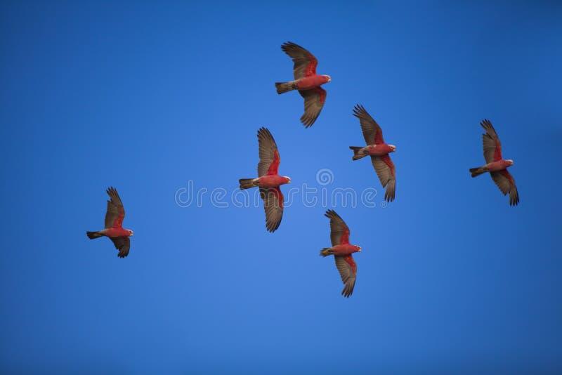 Flock of birds stock image