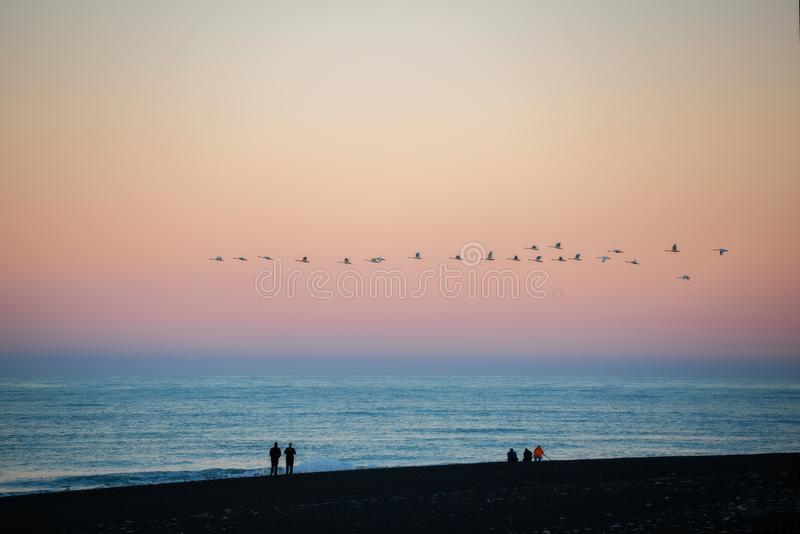 A flock of birds fly at sunset at Diamond beach ,Iceland.  stock image