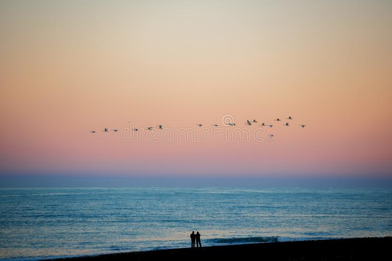A flock of birds fly at sunset at Diamond beach ,Iceland.  royalty free stock images