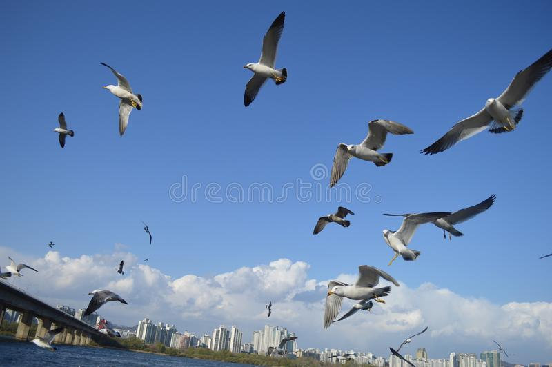 Flock Of Birds Flying stock image