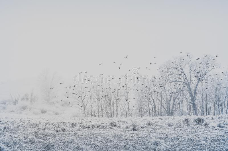 A flock of birds flying above a land in winter royalty free stock image