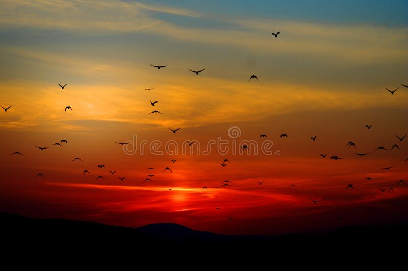 Flock of Birds Flying Above the Mountain during Sunset stock images