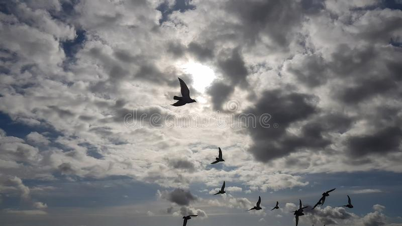 Flock of birds flying on cloudy day.  stock photos