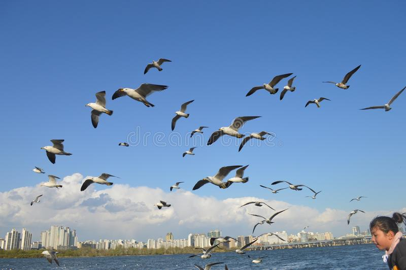 Flock Of Birds Flying Over Body Of Water royalty free stock photo