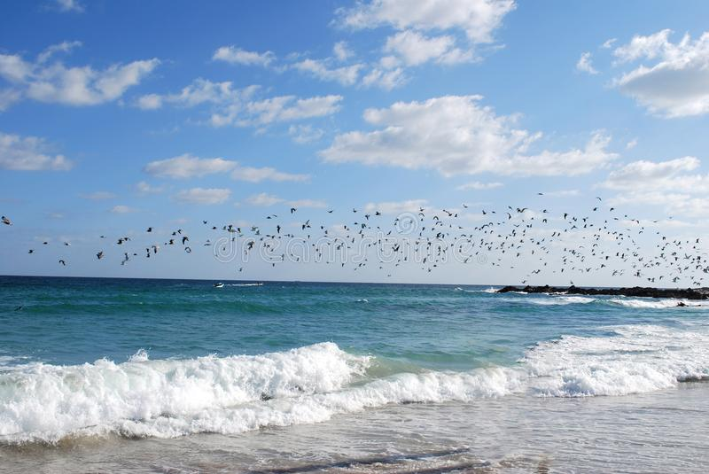 Birds are flying over above the water waves. A flock of birds are flying in the sky stock photos