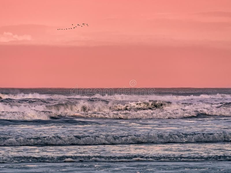 Flock of birds flying in the sky over the sea at dawn stock image