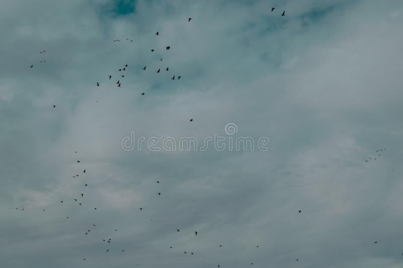 Flock Of Birds Flying Under Cloudy Sky stock images