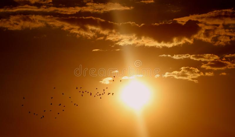 Flock of Birds Flying Under Sun and Clouds stock photo