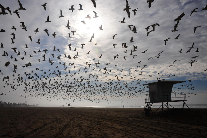 Flock of birds over beach stock image