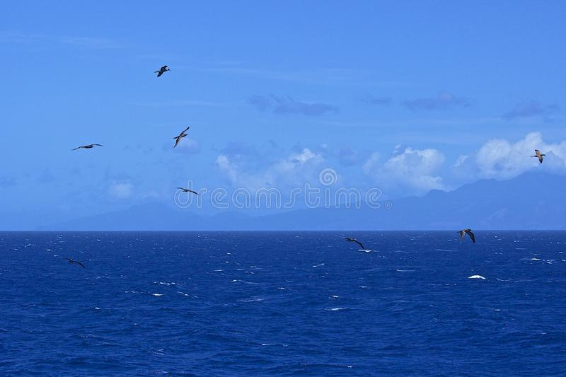 Flock of birds over the sea royalty free stock photo