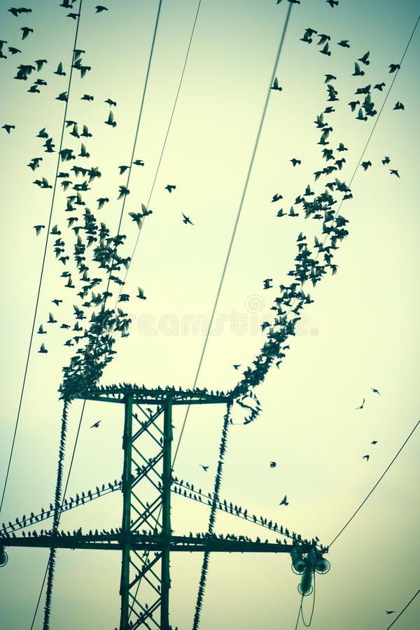 Flock of birds on power lines stock photography