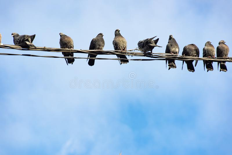 A flock of birds sits on the wires. Against the blue sky, group, animal, feather, black, electricity, cable, background, waiting, line, rest, nature, wild stock images