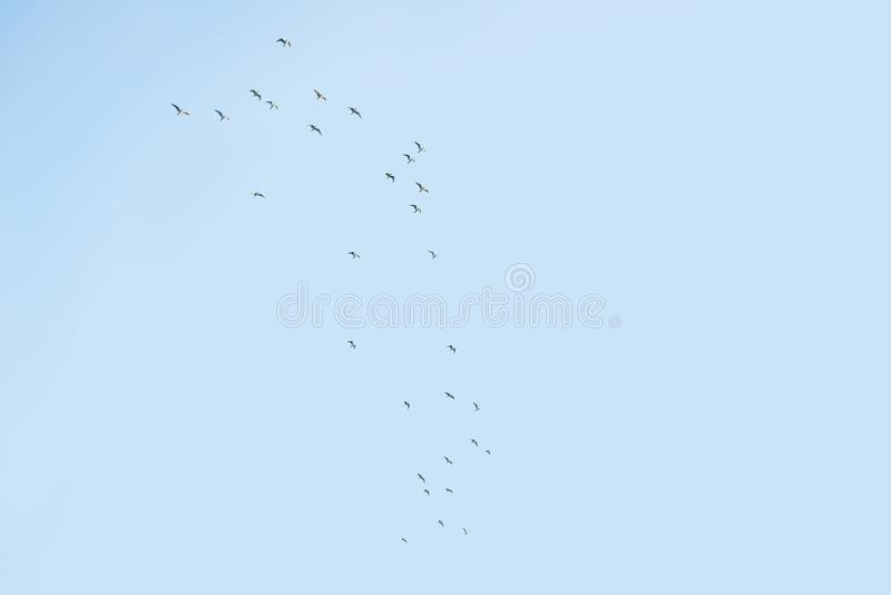 A flock of birds in the sky. A flock of birds flies to warm places royalty free illustration